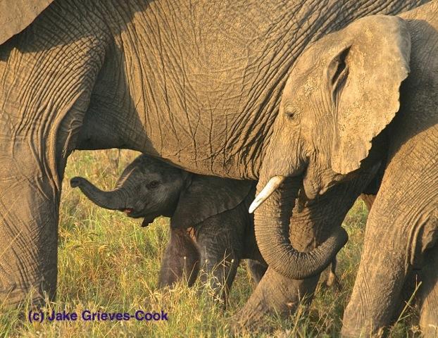 Counteracting poaching in Kenya