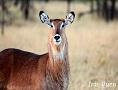 Kenya Exclusive Camp Safari